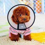 5ivepets Elizabeth Collier de cicatrisation pour animaux Collier anti-morsures pour chien/chat/animal domestique, disponible en 7 tailles de la marque 5ivepets image 1 produit