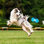 Adogo pour animal domestique à mâcher durable Toys-cotton Cordes pour chiens (lot de 6) de la marque Adogo image 2 produit