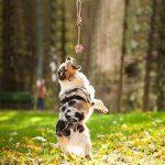 Adogo pour animal domestique à mâcher durable Toys-cotton Cordes pour chiens (lot de 6) de la marque Adogo image 3 produit