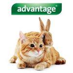 Advantage 80 Chat/Lapin 4-10 kg 6 pipettes antiparasitaires de la marque Bayer image 2 produit