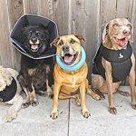 All Four Paws, The Comfy Cone, la collerette de protection confortable pour animal domestique de la marque James & Steel image 1 produit
