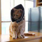All Four Paws, The Comfy Cone, la collerette de protection confortable pour animal domestique de la marque James & Steel image 3 produit