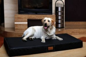 arthrose hanche chien TOP 1 image 0 produit