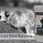 arthrose hanche chien TOP 9 image 3 produit