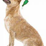 Beaphar - VETOpure, pipettes répulsives antiparasitaires - grand chien (30 kg image 1 produit