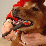 Brosse à dents pour chien pour animal domestique Soin des dents – Trois Têtes Brosse à dents – Recommandé par les vétérinaires et Toiletteurs – Idéal pour moyen chien de grande taille – Manche ergonomique pour faciliter le Toilettage d'hygiène bucco-denta image 2 produit