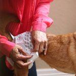 calmant pour chien nerveux TOP 10 image 4 produit
