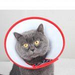 chat avec collerette TOP 11 image 1 produit