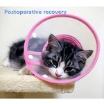 chat avec collerette TOP 7 image 2 produit