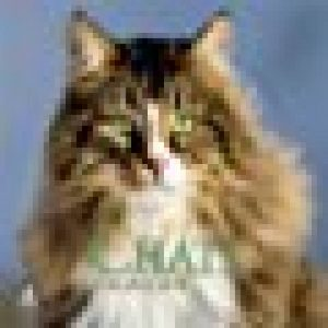 collerette chat ou acheter TOP 0 image 0 produit