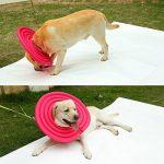 collerette grand chien TOP 2 image 3 produit