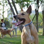 Collier Antiparasitaire chien, MagicHome externe pour chien ou chat contre les puces les tiques et les moustiques de la marque MagicHome image 1 produit
