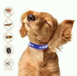 Collier antiparasitaire pour grands/petits chiens et chats, Colliers anti-puces et tiques, Antiparasitaire externe pour chat et chiens, contre les puces et les tiques (petits chiens) de la marque SEVICAT image 0 produit