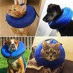 Collier gonflable de protection en cône pour chiens et chats - Doux - Pour la convalescence après une chirurgie - Empêche les animaux domestiques de toucher les points de suture (S) de la marque MicroPowerTech image 6 produit