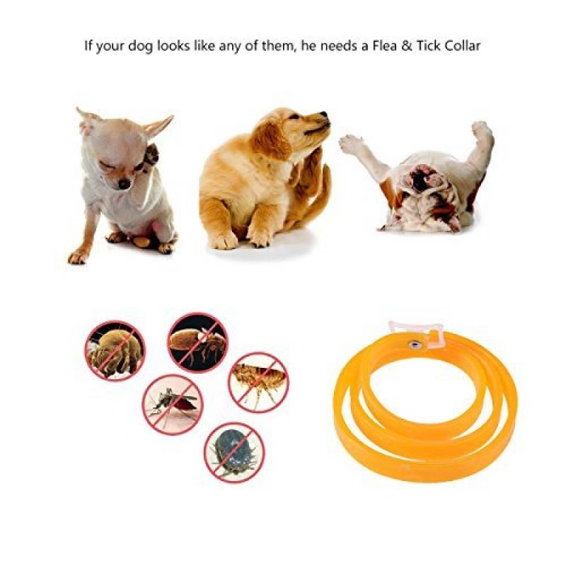 collier anti puce et tique chat faites le bon choix sant du chien. Black Bedroom Furniture Sets. Home Design Ideas
