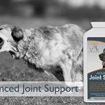 glucosamine chondroïtine msm pour chien TOP 3 image 2 produit