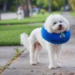 Gzq gonflable Collier de chien confortable gonflable pour animal domestique Coque de protection pour chats Border Collie épagneul–éviter les animaux à partir de rayures et piqûres d'à des blessures, mailles, Éruptions, et des plaies de la marque GZQ image 5 produit
