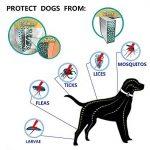 huiles essentielles anti puces et tiques pour chien TOP 11 image 1 produit