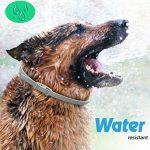 huiles essentielles anti puces et tiques pour chien TOP 12 image 3 produit