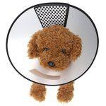 Mangostyle Collerette vétérinaire pour chien/chat, pour protection et cicatrisation. de la marque Mangostyle image 4 produit