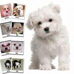 nettoyant oculaire pour chien TOP 6 image 1 produit
