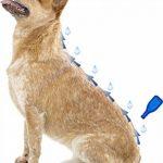 pipette antiparasitaire chien TOP 6 image 1 produit