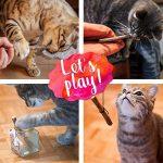 PRETTY KITTY 5 bâtons de Matatabi à mâchonner de PrettyKitty –Jouet à la menthe à chat pour une dentition féline saine et contre la mauvaise haleine – Set de tiges de liane à chat de la marque PRETTY KITTY image 4 produit