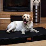 tierlando os4-ll-03 Oscar ortho-medic de luxe MATELAS ORTHOPÉDIQUE VISCO lit pour chien taille L 100cm – cuir artificiel noir de la marque tierlando image 0 produit